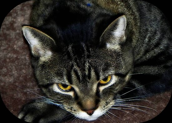 I just woke from a catnap...give me a few before you snap!!! Boo Romo ©  by Dawn M. Becker