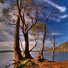 Lake Leake Gum Trees by Kip Nunn