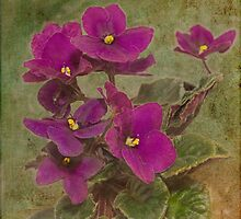 Purple African Violet by Peter D