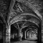 Cellarium by Dave Tucker