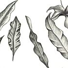 Leaf Study by CarlL