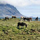 Icelandic horses by Sandy Maya Matzen