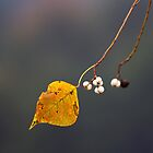 Autumn Leaf by thepathtraveler