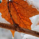 Winter Finds Unfallen Leaf by goddarb