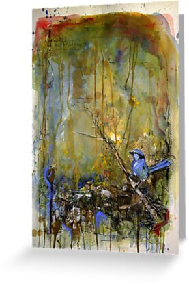 Superb Fairy Wren by urbanmonk