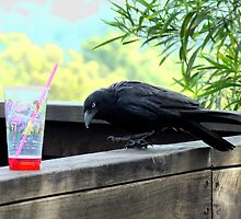 Australian Crow looking for a drink? by Craig Stronner