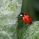 IN BETWEEN by Betsy  Seeton