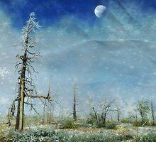 """ Walking in a winter wonderland "" by CanyonWind"