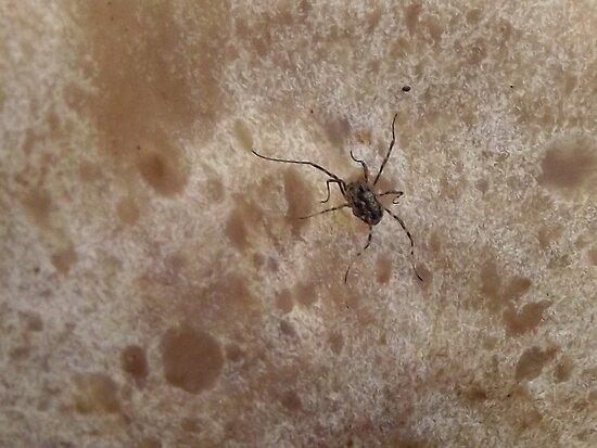Tiny Spider on Mushroom by SophiaDeLuna