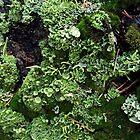 Lichen and Moss on Tree Trunk by SophiaDeLuna