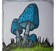 Blue Mushrooms Photographic Print