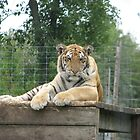 The King of Elmvale zoo by Jeanette Muhr