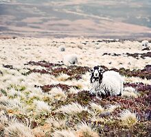 Baa Baa Beige Sheep by ieatstars
