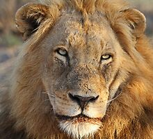 Majigilane male (The Sabi Sands will soon belong to our coalition) by jozi1