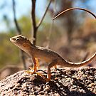 Inscrutable Australian Dragon by Bill  Robinson