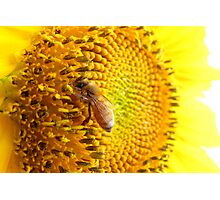 Pollination Series ~ 6 Photographic Print