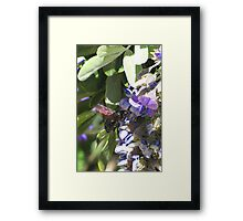 Pollination Series ~ 2 Framed Print