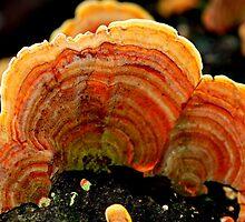 Rainbow Fungus by Adam Le Good