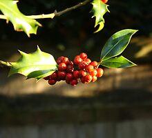 Holly by BigNizzi