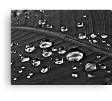 From out there dropped...Got 3 Featured Works, Top Ten Challenges BLACK & WHITE PHOTOGRAPHER'S SHOWCASE Canvas Print