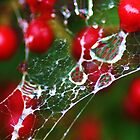 webs and berries by ANNABEL   S. ALENTON