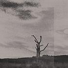 lone tree III by bonhy