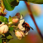Busy Bee by Simon Evans