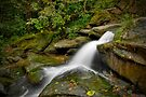 Sydney Waterfalls - Flat Rock Gully by vilaro Images
