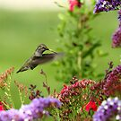 Humming Above the Color by DARRIN ALDRIDGE