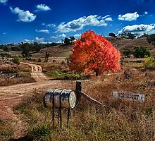 Autumn Standout by Ian English