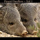 Desert Dwellers ~ Vol 1 by Kimberly Chadwick