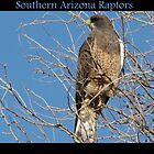 Southern Arizona Raptors by Kimberly Chadwick