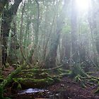 Sunlight through Ballroom Forest - Cradle Mountain, Tasmania by clickedbynic