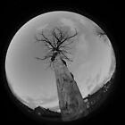 Tree Fisheye by Sarah Horsman