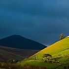 Tree on the side of Blencathra by mattcattell