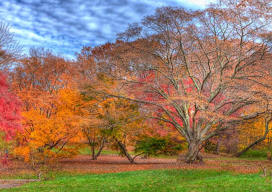 Fall Branches by Jack DiMaio