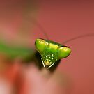 Praying Mantis 3 by Yanni
