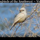 Songbirds of the Southwest ~ Vol 1 by Kimberly P-Chadwick