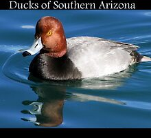 Ducks of Southern Arizona by Kimberly Chadwick