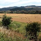 Between Lake Buffalo and Myrtleford Vic by OzNatureshots
