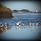 Dancing Sea Gulls 2 by Scott Riley