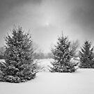 Winter Sun by Steve Silverman