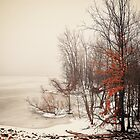 A foggy January morning by woodnimages