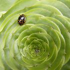 Beetle on succulent. by Esther's Art and Photography