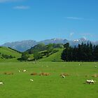 Spring landscape South Island New Zealand by Alison Murphy