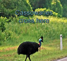 Cassowary Crossing by STHogan