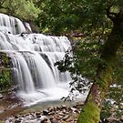 Liffey Falls, Tasmania by Tim Wootton