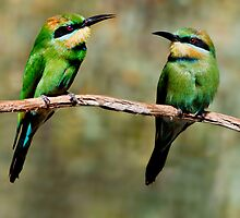 Rainbow Bee Eaters by Kath Gillies