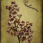 Paulownia by Elaine Teague