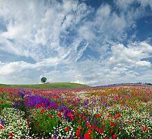 ...spring idyll... by ambiaso